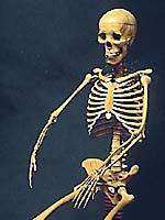 A wooden skeleton  made in 1819 to assist in the study of orthopedics