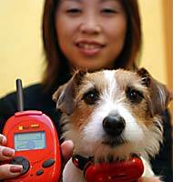 Index Corp. President Yoshimi Ogawa with her company's Bowlingual, developed last year with toymaker Takara Co. to 'translate' dogs' sounds and emotions into phrases like 'I can't stand it' and 'I have a favor to ask.'