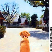 Nowadays, Japan's ideal home for many is not complete without a four-footed friend in residence.