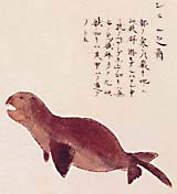 'A Picture of a Seal' by samurai artist Kawada Shoryo, based on Manjiro's accounts
