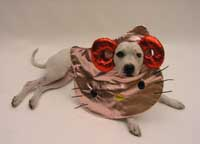 'The Hello as Fouritty Bag' for Kitty-lovin' canines -- or owners   (c)1976, 2004 SANRIO/As Four; MARCELO KRASILCIC PHOTO