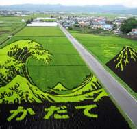 This year's rice-paddy artwork created by the farmers in Inakadate Village in Aomori Prefecture is a reproduction of a famous Edo Period print by Katsushika Hokusai (top), while in their fields in 2006 the village people reproduced 'Fujin Raijin Zu Byobu (Wind God and Thunder God Screens)' by the early Edo Period artist Tawaraya Sotatsu (above), and in 2005 they grew rice replicating  ukiyo-e  works by Sharaku and Utamaro (below). | YOKO HANI PHOTO (top); PHOTOS COURTESY OF INAKADATE VILLAGE OFFICE