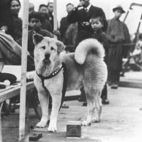 Loyal to the end: If he lived today, Hachiko's chances of surviving long on the streets of Shibuya would be very slim, especially if he was picked up by the Tokyo government's animal control division.   KYODO