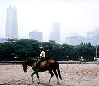 The horse-riding stables at Yoyogi Koen; and Yoyogi Hachiman