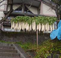 A row of daikon (Japanese radish) hang outside Mitake Visitors Center