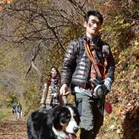 Mount Mitake OKs dogs
