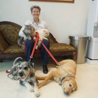 Happy, healthy family: Tracey Perkins holds her cats and dogs at the Daktari Animal Hospital Angell Memorial International in Tokyo's Minato Ward in November. | MAMI MARUKO