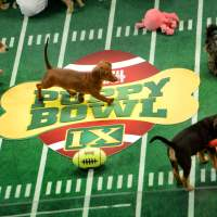 Puppy Bowl grows in leaps, bounds