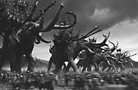 The Mumakil mammoths in the Battle of Minas Tirith.