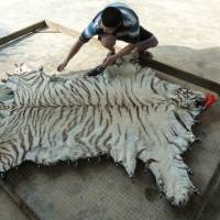 Blood trades: An image of farmed a Chinese tiger-parts product from the report 'Hidden in Plain Sight' (EIA, 2013). | EIA-INTERNATIONAL.ORG