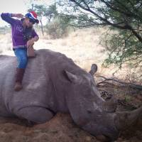 A young lady is seen sitting  astride a very large, dead White Rhino in South Africa ... but for the full story, read on.