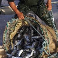 EU ban on discarding fish faces questions