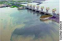 Sea water flows into a murky freshwater reservoir (left)  as the gates of Isahaya Bay are opened to probe the area's poor seaweed harvests.