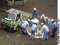 Tama Zoo workers simulate capturing a lion during a disaster drill at the zoo in Hino, western Tokyo.