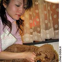 Melon the miniature poodle luxuriates as a beautician massages him with aromatic oil at a salon for dogs in Tokyo's Daikanyama district.