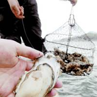 Group adds summer to oyster season