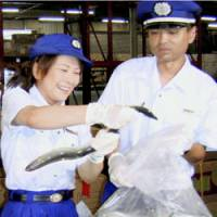 Customs officials at Kansai airport examine imported eels in July 2005. | KYODO PHOTO