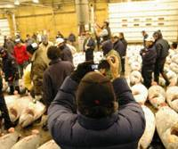 A tourist videotapes a tuna auction early on Jan. 26 at the Tsukiji Fish Market in Tokyo's Chuo Ward. | REIJI YOSHIDA PHOTO