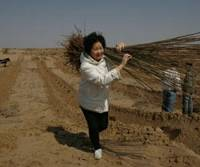 Replanting desserts: Yi Jiefang carries tree seedlings in Tongliao, Inner Mongolia, in China in this undated photo supplied by Green Life, a Tokyo-based nonprofit organization that has planted 200,000 trees in the area to combat desertification. | KYODO PHOTO