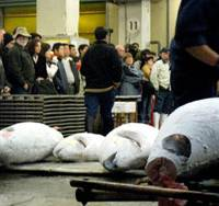 Tsukiji reopens tuna auctions to the public