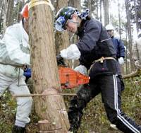 Blade runner: A woman chain-saws a cypress with the help of a forester during a lecture on logging in Hanno, Saitama Prefecture, on Jan. 29. | KYODO PHOTO