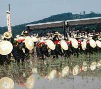 Fieldwork: Women in traditional costume plant rice during the 'Mibu no Hanataue' ritual in northern Hiroshima Prefecture in this undated file photo from the Cultural Affairs Agency. | KYODO PHOTO