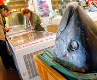 Bluefin breeder nears breakthrough