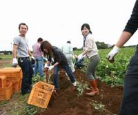 Planting seeds: Singles dig for potatoes, and partners, in a field in Namegata, Ibaraki Prefecture. | DAVID MCNEILL