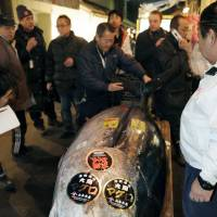 By the slice: Thursday's New Year auction at Tokyo's Tsukiji market saw this 269-kg tuna sell for a record-high 56 million. | KYODO PHOTO