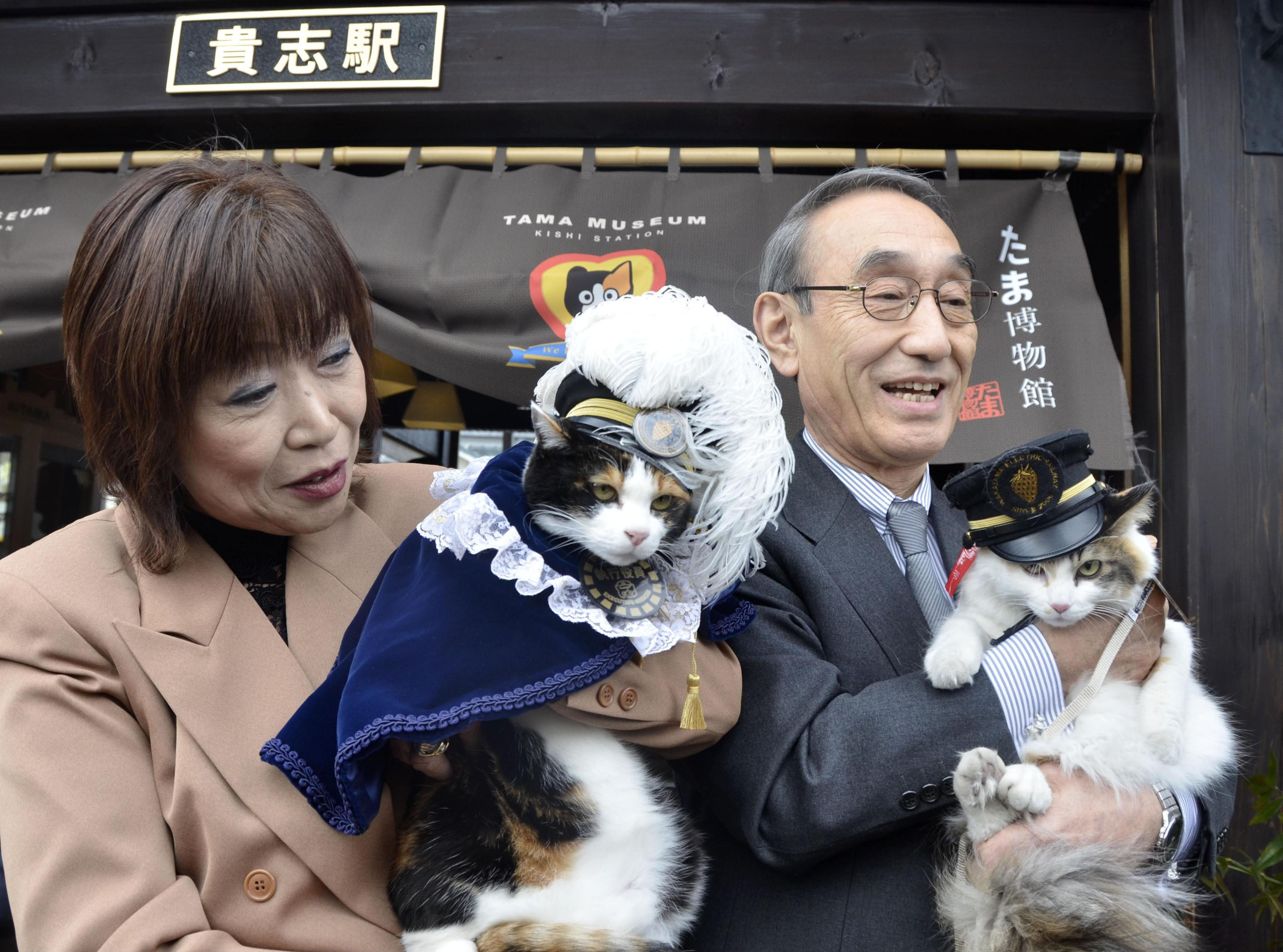 Purr-fect pair: Feline rivals Tama (left), a mascot cat at Kishi Station in Kinokawa, Wakayama Prefecture, and her likely successor, Nitama, are held up for a photo at the station Thursday. | KYODO