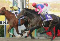 Lemaire guides Kane Hekili to Japan Cup Dirt triumph