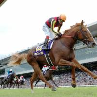 Fight for the finish: Orfevre comes home to win the Kikka-sho at Kyoto Racecourse on Sunday. | KYODO