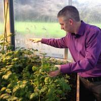 Superspuds: Ewen Mullins examines genetically modified potatoes that will be tested at the Irish government's agricultural research farm outside Carlow, eastern Ireland. | THE WASHINGTON POST