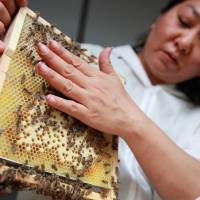 Busy bees: Bees account for 80 percent of plant pollination by insects. | BLOOMBERG