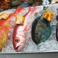 Sea bounty: An Okinawan grouper, a red snapper and a parrotfish await buyers at Naha Municipal Fish Market. | HILLEL WRIGHT PHOTO