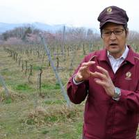 Looking abroad: Naoki Watanabe of Suntory's Tomi no oka winery in Kai, Yamanashi Prefecture, is interviewed March 27. | AFP-JIJI