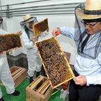 Tokyo bookstore boasts roof apiary