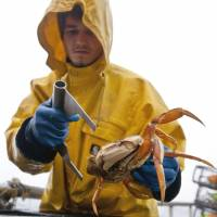 Hard to crack: Scientists believe crabs are bulking up on carbon pollution that pours out of power plants, factories and vehicles and settles in the oceans. | BLOOMBERG