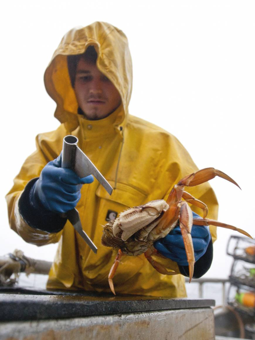 Ocean acidification supersizing blue crabs