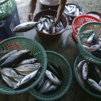 Livelihoods at stake: A man sorts fish in the town of Infanta in the northwest Philippines. Since China took control of the Scarborough Shoal last year, Filipino fishermen say Chinese surveillance ships have shooed them away from their disputed fishing paradise in the South China Sea. | AP