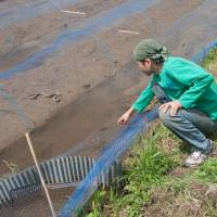 Urban refugee: Yasunori Toyoguchi gave up the city life to start his own organic farm in Motegi, Tochigi Prefecture. He checks his new rice crop while a grass snake basks in the sun, a sign that the water is good. | MAKIKO ITOH