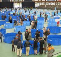 Mill pools: Nishikigoi owners, breeders, dealers and fanciers mill around the 100-plus tarpaulin pools housing the fish during the recent two-day annual ZNA All-Japan Show.