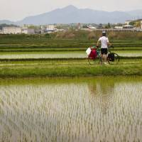 Day 25: Cycling the backroads between rice fields in Mie Prefecture. | ANDREW MARSTON