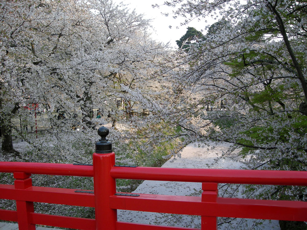 Pink spot: Hirosaki Park is one of the best areas in Japan for cherry blossoms. | © JNTO