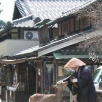 Snap happy: One of Nara's free-roaming deer checks out a mendicant monk for edible tidbits.