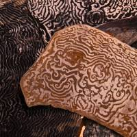 Natural patterns on the inner sides of sea-turtle plates are as lovely as any human carvings.   KIT NAGAMURA