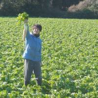Nonagricultural firms helping farms rebound