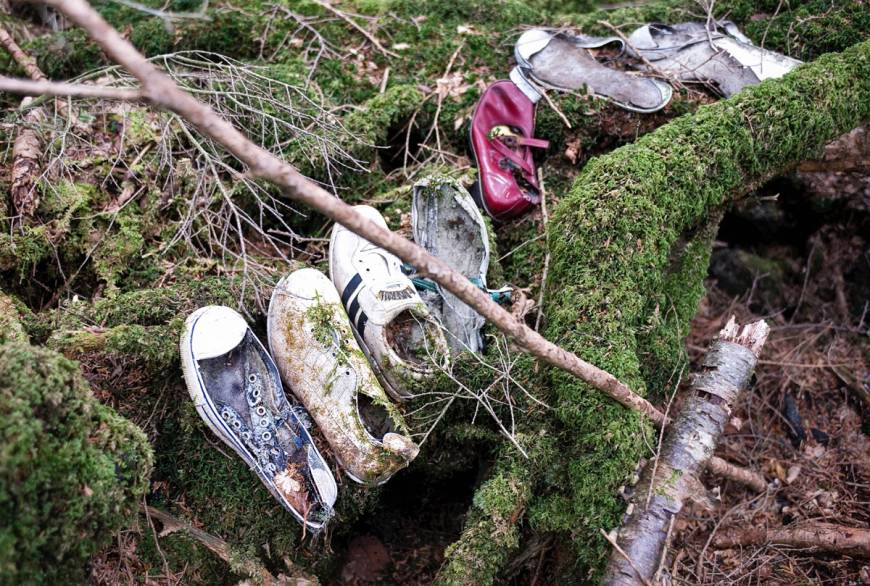 Image result for forest in japan where people kill themselves