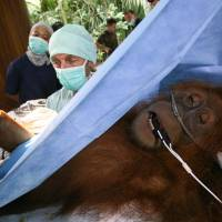 Ecological disaster looms for rain forests of Sumatra