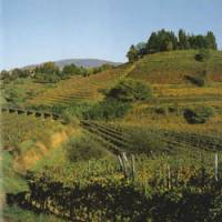 Avoiding the heat: To ensure that Italian wines reach Japan in peak condition, K.K. Vinarius imports wine directly from areas such as Friuli-Venezia Giulia and makes sure that shipments are kept at a constant 10 C during the voyage.